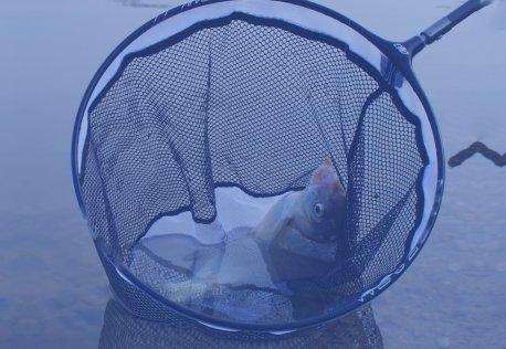 Sacadoras de Pesca