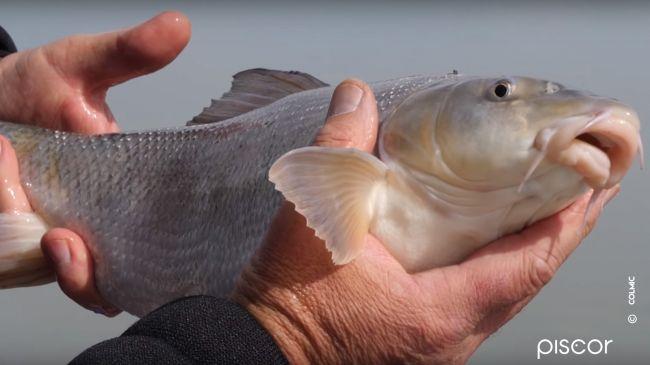Barbel And Chub Fishing 6