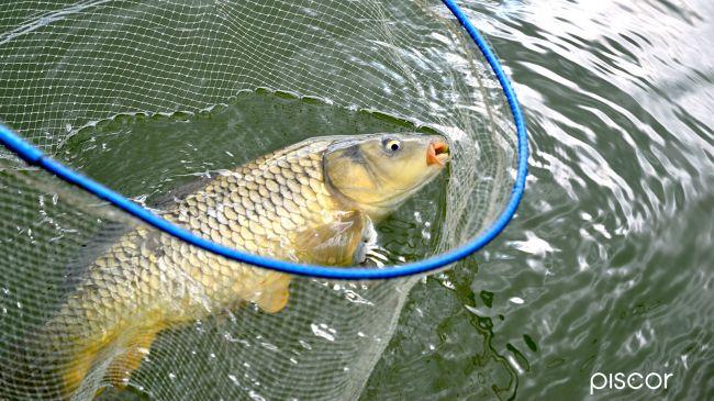 Carp Fishing 5
