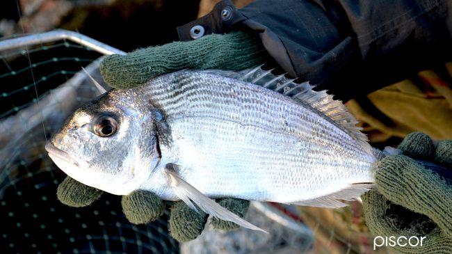 Living Bait Sea Fishing 1