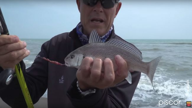 Ombrine A Surfcasting 5