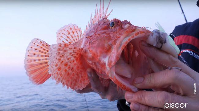 Pêche de la Rascasse Rouge en Bateau 1
