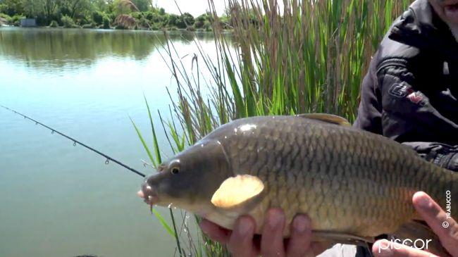 Pellet Feeder Fishing in Fisheries 8