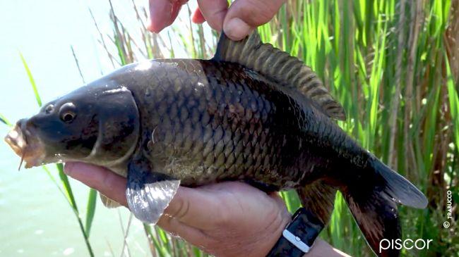 Pellet Feeder Fishing in Fisheries 9