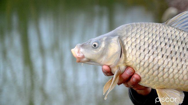 Pesca a Galla in Carpodromo 4