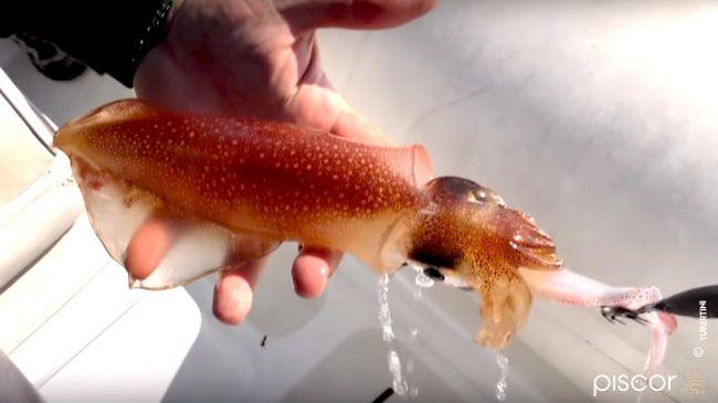 Pesca ai Calamari 5