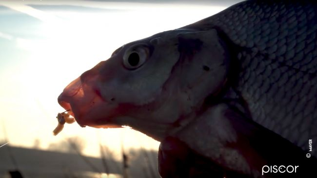 Roubasienne per la Pesca al Colpo 3
